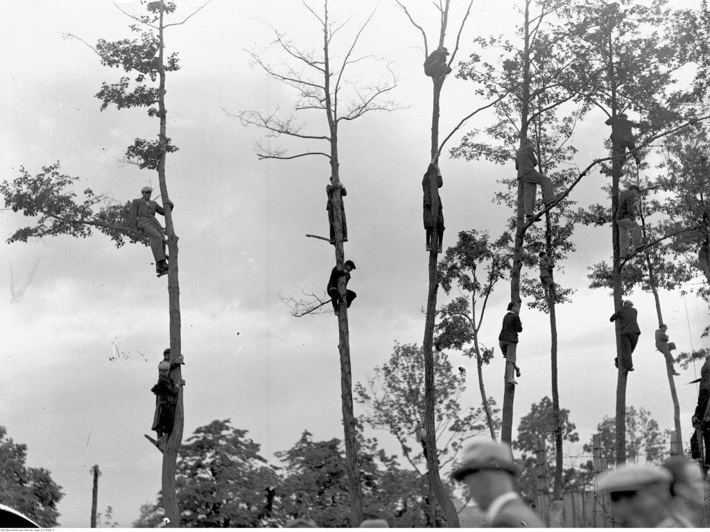 kibice sportowi siedzą przytuleni do drzew, obserwując z wysoka mecz piłki nożnej