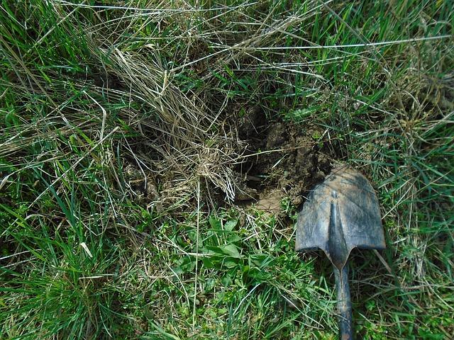 łopata na trawie