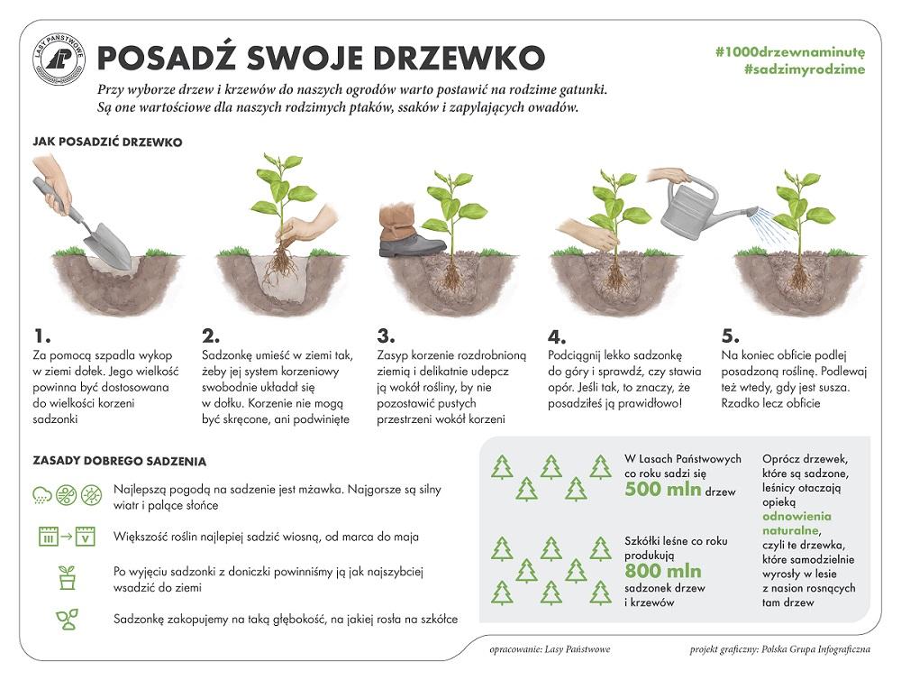 obrazkowa instrukcja kolejnych etapów sadzenia drzewka i praktyczne wskazówki co do sadzenia