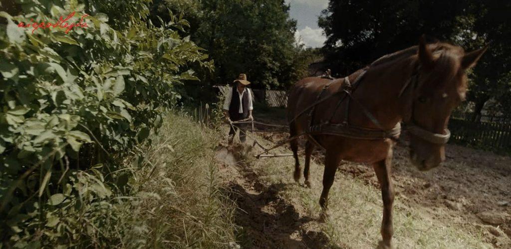 mężczyzna z pługiem i koniem w polu