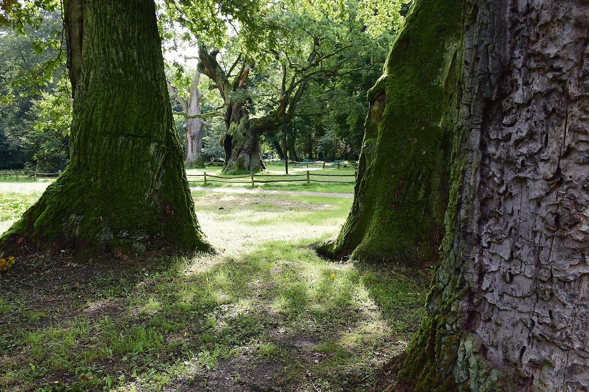 Zdjęcie parku w Rogalinie. Autorem fotografii jest Piotr Wilanowski.