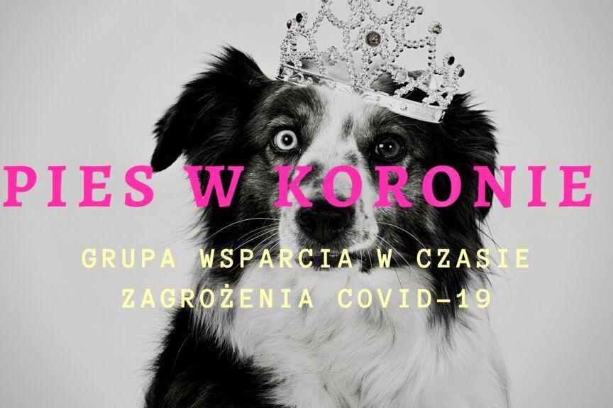 Obrazek przedstawia psa, któremu na głowę nałożono koronę. Grafika jest czarno-biała, na niej umieszczono kolorowe napisy: PIES W KORONIE GRUPA WSPARCIA W CZASIE ZAGROŻENIA COVID-19